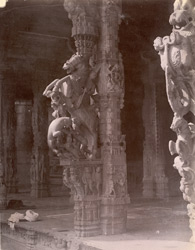 Close view of pillar with sculpture of rearing horse, in the Kalyana Mandapa, Jalankanteshvara Temple, Vellore
